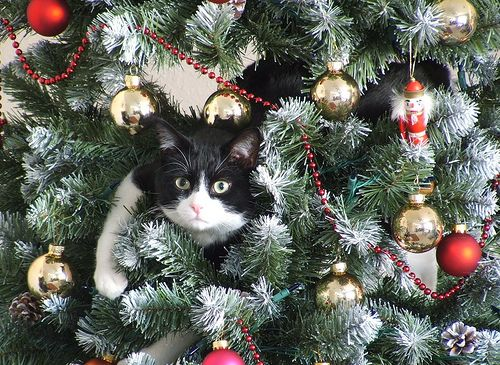 At Christmas time, cat owners can relate to this.