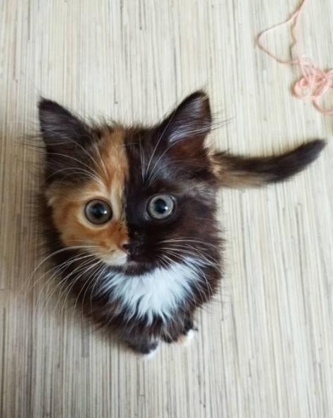 Yana the two faced cat