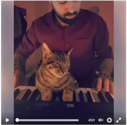 Cat loves his owner's music