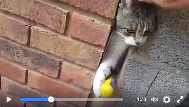 Cat trapped in a wall