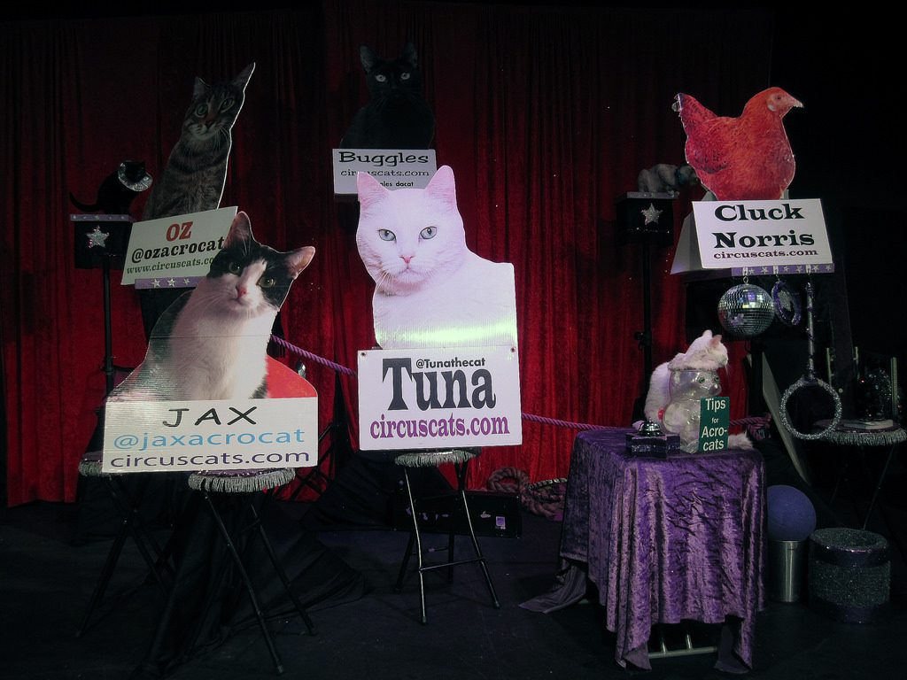 Acro-Cats Circus Rescues Foster Kittens