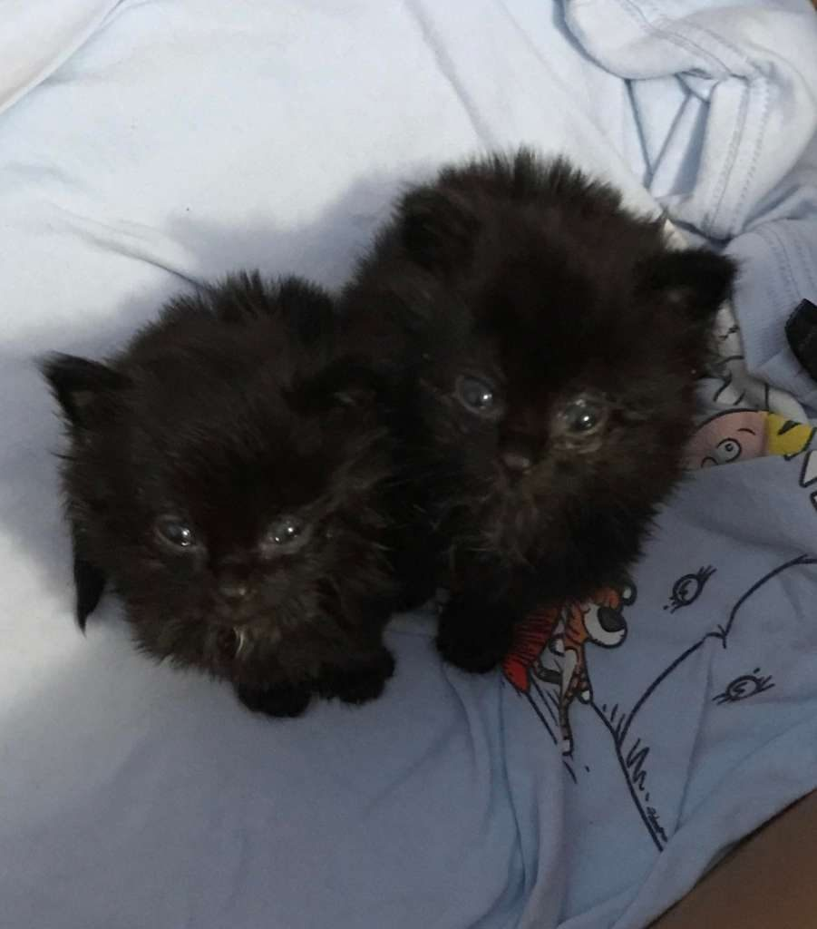 Tiny kittens rescued from under a house