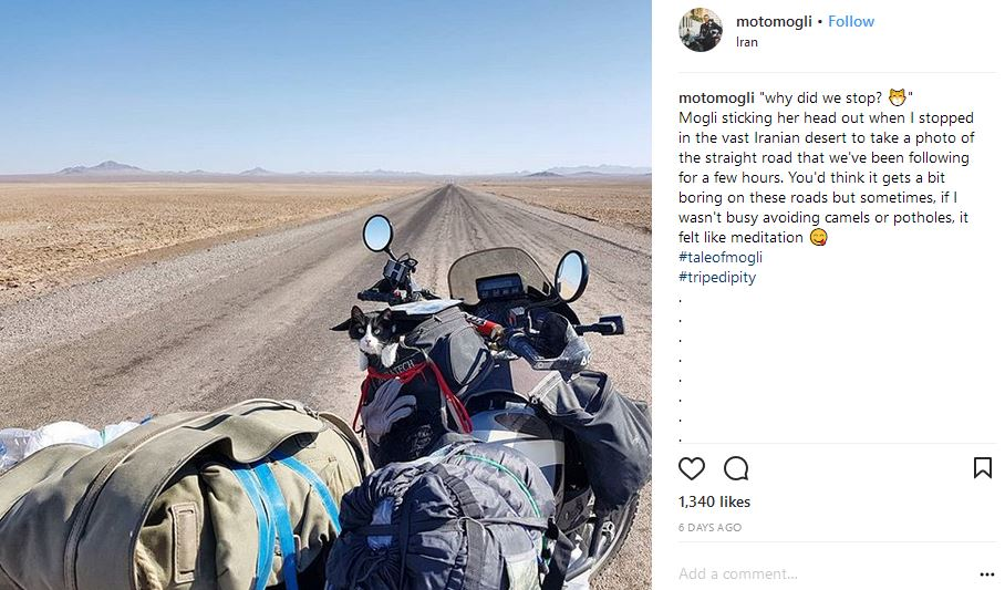 Adventure cat travels around the world in a motorbyke
