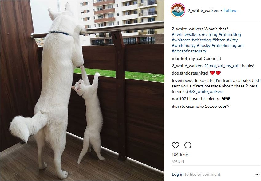 kittensfindsfamily