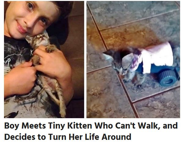 Boy helps kitten that cant walk